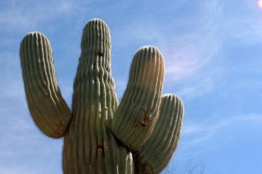 Desert Arboretum Park